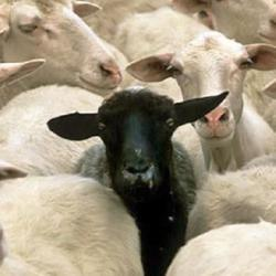 BLACK SHEEP UNITE Clubhouse
