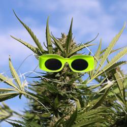 Cannabis & Crypto Clubhouse