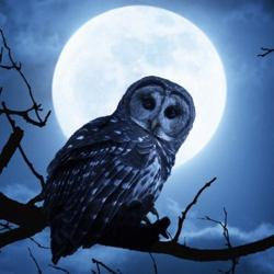 We Are Night Owls Clubhouse