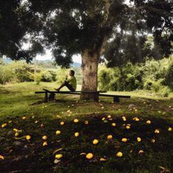 Mango Tree Clubhouse