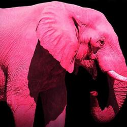 The Pink Elephant Clubhouse