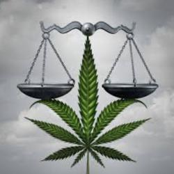 Cannabis Social Equity Clubhouse