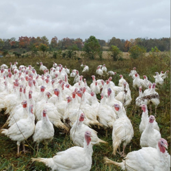 Pastured Poultry Clubhouse