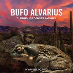 Bufo Alvarius Clubhouse