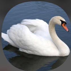 swan beautiful Clubhouse