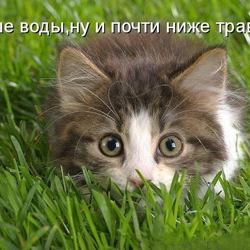 ТИШЕ ВОДЫ, 500+ ДРУЗЕЙ Clubhouse