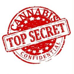 Cannabis Confidential  Clubhouse