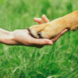 Animal advocacy/activism  Clubhouse