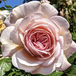 La Vie en Rose Clubhouse