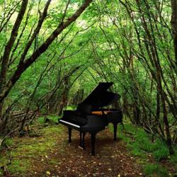 FOREST OF THE PIANO Clubhouse