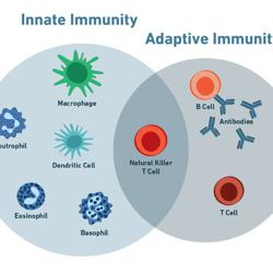 Vaccines and the Immune System Clubhouse