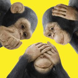 سه میمون اندرزگو Clubhouse