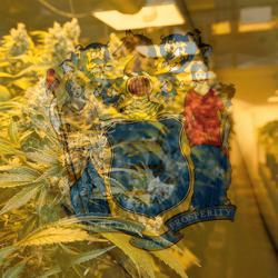 East Coast Cannabis Network Clubhouse