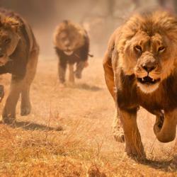 Da Lion's Den Clubhouse