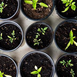 Grow Food and Prosper Clubhouse