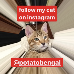 follow my cat's instagram Clubhouse